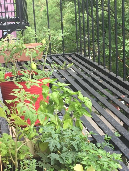 NYC herb garden